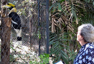 Photo: Peg checks out one of the noisy Hornbills we came across.