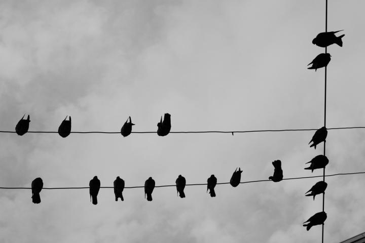 Sky  Pigeon di GilSV