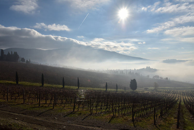 Tra le nebbie del mattino di Ilaria Bertini