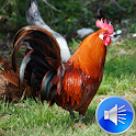Rooster Sounds Ringtones icon