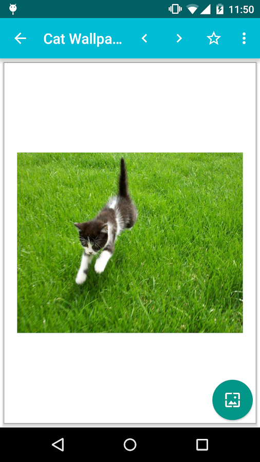 Cat Wallpapers!- screenshot