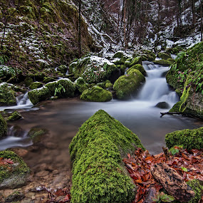 Wondrous forest VX by Zoran Rudec - Landscapes Waterscapes ( nature, waterscape, snow, waterfall, forest )