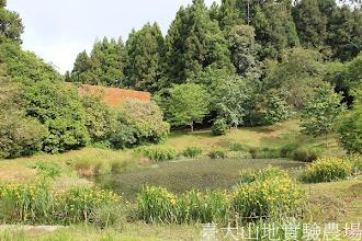 Photo: 拍攝地點: 梅峰-黑水塘 拍攝植物: 黃花水生鳶尾 拍攝日期:2012_05_09_FY