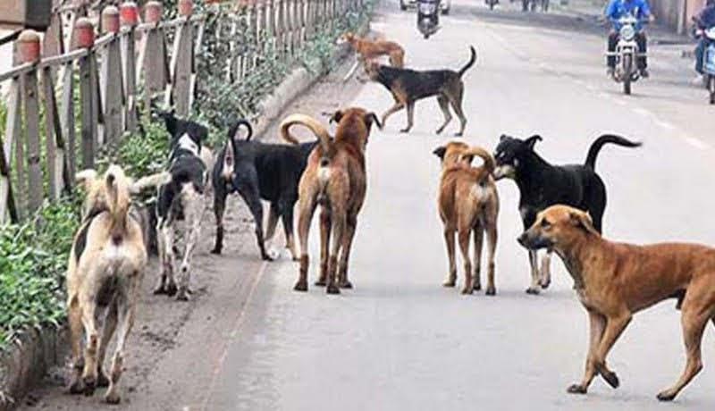 Jalan Ethanol Banyak Anjing Berkeliaran Meresah dan Mebahayakan Pengguna Jalan Roda Dua