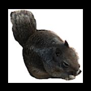 Squirrelly (No Ads)