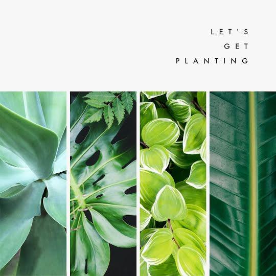 Let's Get Planting - Instagram Post Template