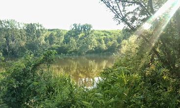 Photo: Wild waterworld at the lake of Verpelét (2014)