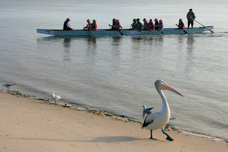 Photo: Dragons Abreast Bribie Island pics
