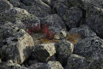 Kuva: Lisää värejä löytyy kivien välistä ja kivien pinnasta