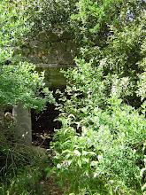 Photo: Tombs tucked away in the bushes ********** Graven verborgen in het struikgewas