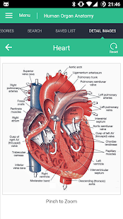 Human Organs Anatomy Reference Guide Screenshot
