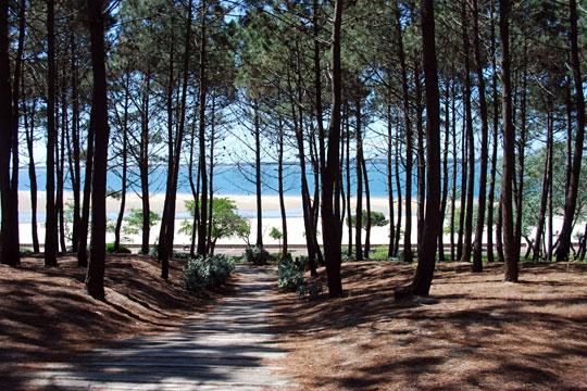 Forêt et Plage