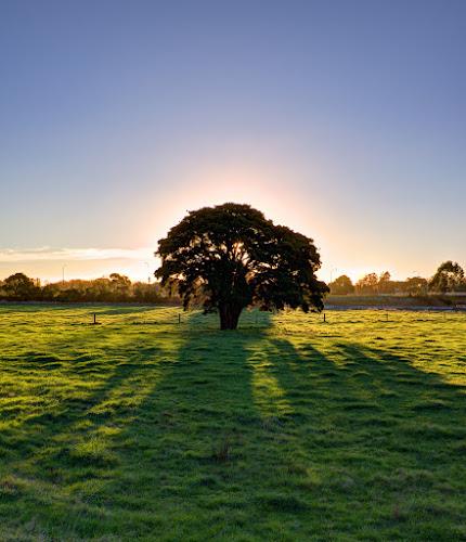 Lone Tree by Nadly Aizat Nudri - Landscapes Prairies, Meadows & Fields