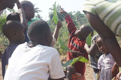 A Sierra Leonean child pointing to a leaf in the direction of the sun