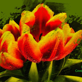 Mist Covered Tulips by Dave Walters - Typography Words ( typography, tulips, nature, lumix fz2500, colors, digital art )