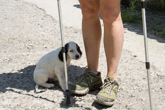 Photo: Trail Puppies