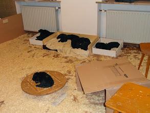 Photo: wir sind ins neue Heim umgezogen - die Betten sind sofort erobert