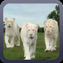 White Lion Wallpaper icon
