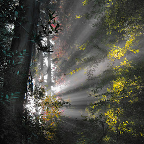 Morning Rays by Gary Pope - Landscapes Forests ( fog, forest, sunrise, landscape, rays )