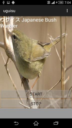 鳥の鳴き声ウグイス