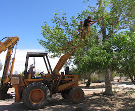 Photo: Volunteers in the bucket trimming dead branches from a tree in the school yard. (Jackie Ridge)