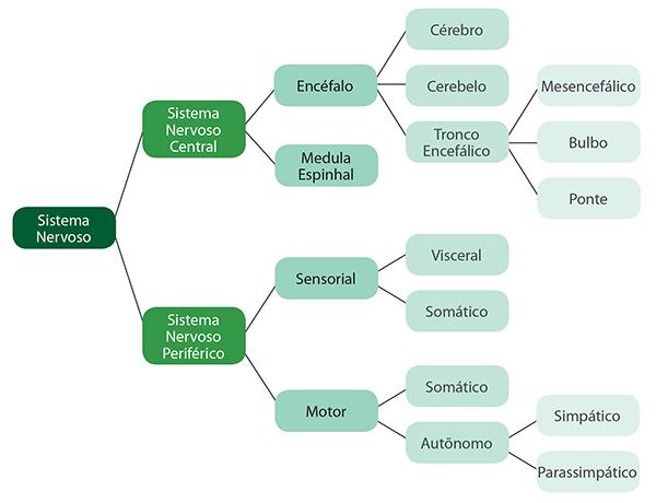 Resultado de imagem para sistema nervoso condução