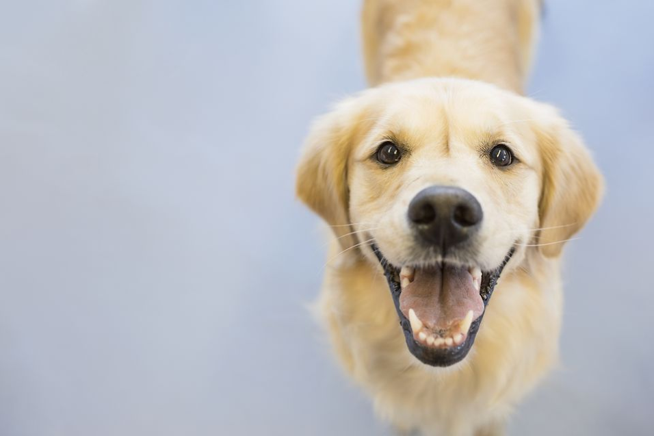 How to Read Your Dog's Body Language