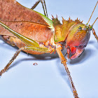 Dragon Headed Katydid