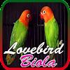 Master Lovebird Biola