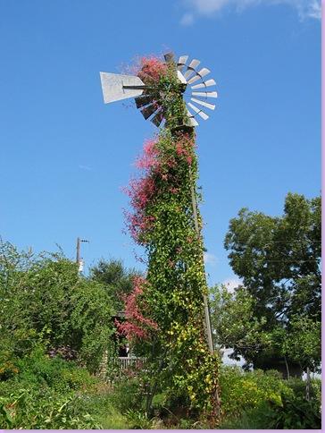 49230245_windmill2