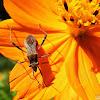 Percevejo - Bug
