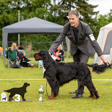 Photo: Openklas reuen / Openclass dogs - Giorgio From the Moorland Friends