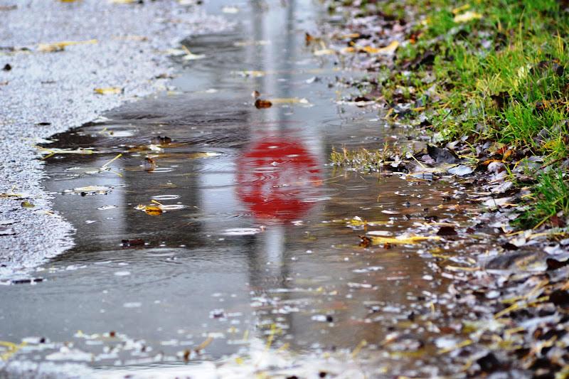 Riflessi nella pioggia di Micaela Lazzari