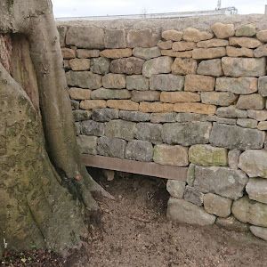 This oak lintel is preserving the beech tree and ancient dry stone wall