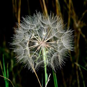 by Radisa Miljkovic - Nature Up Close Other plants