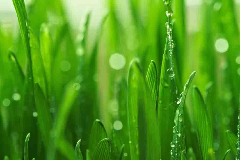 beautiful green grass wallpapers - photo #16