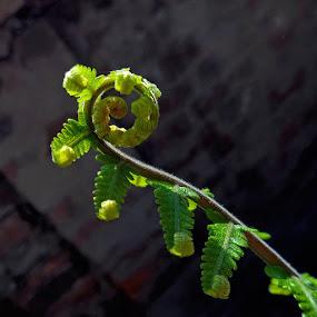 New born by Atreyee Sengupta - Nature Up Close Leaves & Grasses