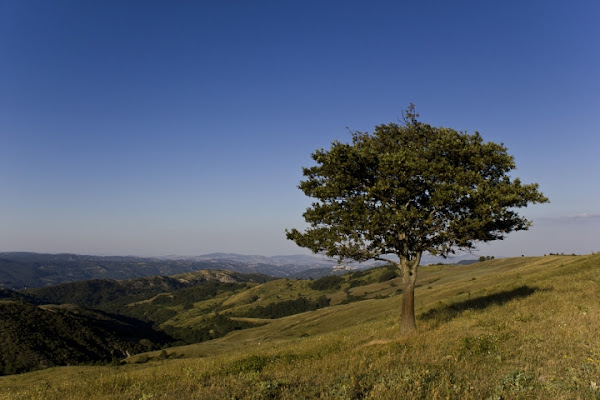 Lone Tree di Trial4life