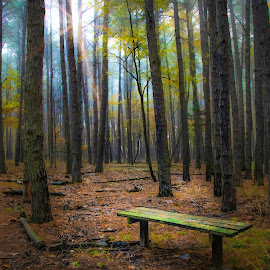 SOLITUDE by Dana Johnson - Landscapes Forests ( forest, sunrise, bench, pathway, autumn, trees, landscape, morning )