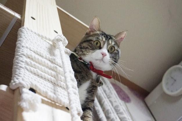 offrez à votre chat des opportunités pour grimper