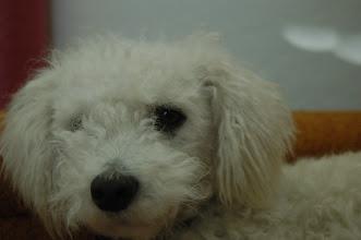 Photo: January 25: Dog Up Close