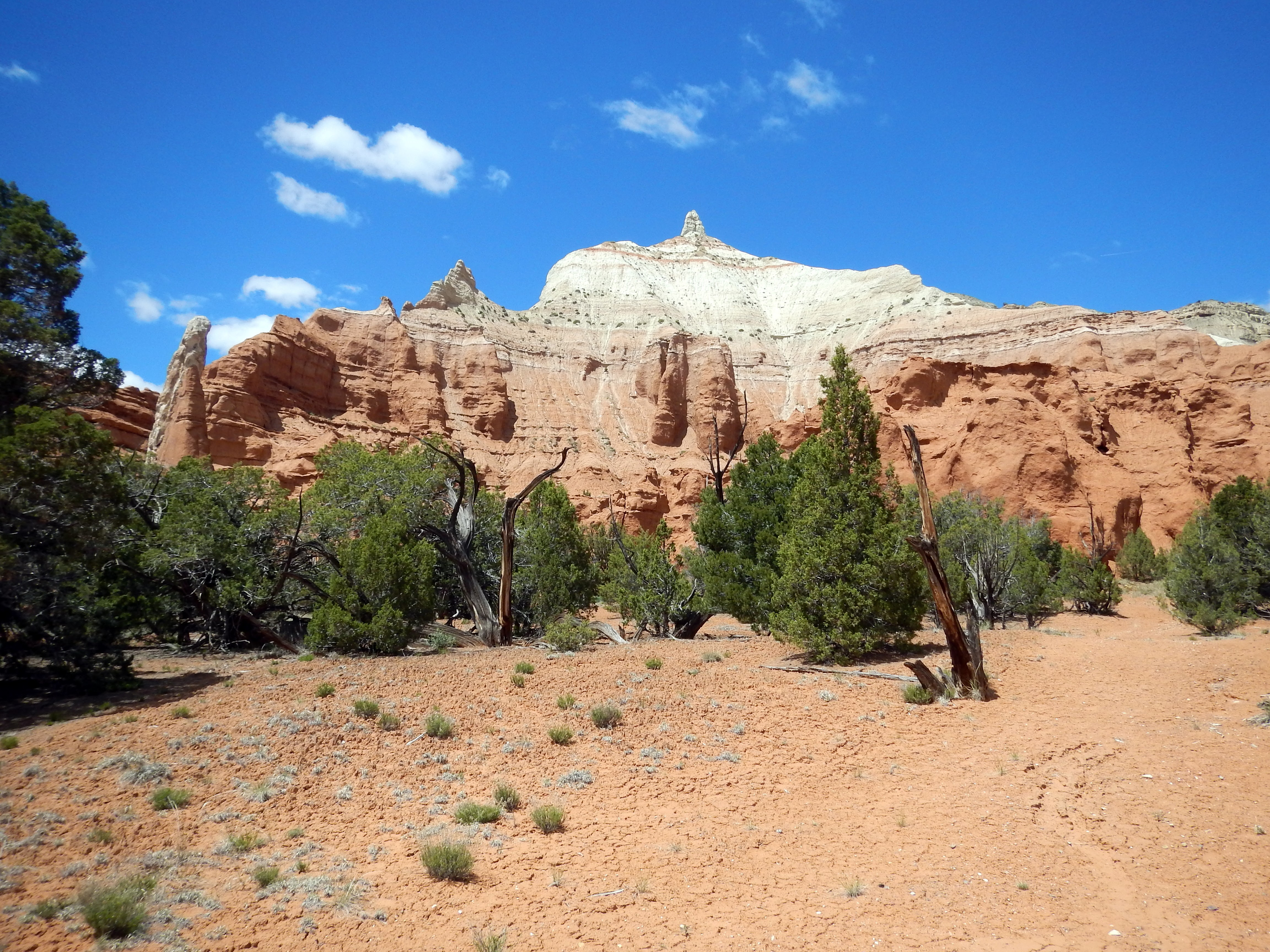 Photo: Park sampler: cryptobiotic crust, juniper trees, chimneys, and colorful rock layers.