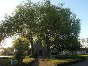 Photo: Platanen voor de kerk
