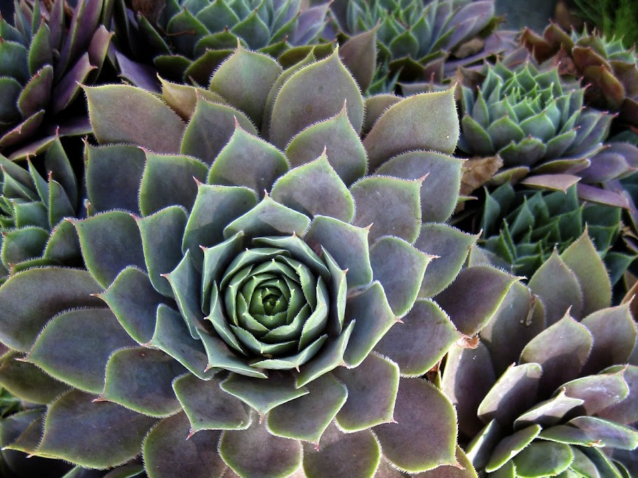 by Amanda Koenigs - Nature Up Close Other plants