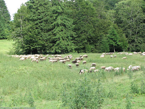 Photo: Asta era turma de oi.