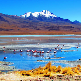 Laguna Honda by Fabio Ferraro - Landscapes Waterscapes ( laguna, laguna honda, lake, flamingos, bolivia )