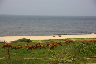 Photo: Year 2 Day 23 - Typical Scenery in this Area - Grass-Edged, Beautiful White Sandy Beach