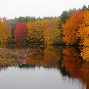 Foliage At Haybrook by Lynne Miller - Landscapes Forests ( water, lynne miller, reflection, alfred maine, maine, foliage )