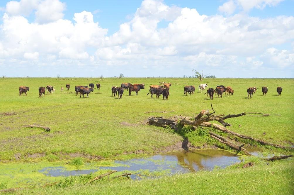 op-safari-in-de-oostvaardersplassen