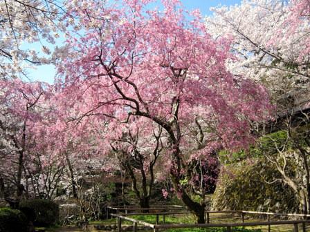 http://www.shoujiji.jp/wp-content/uploads/2012/03/DSCN02381.jpg